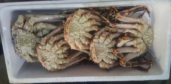 New World Shipping Handle King Crabs from Russia to China