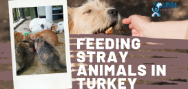 Solibra Logistics Share Update on Stray Animal Donations in Turkey